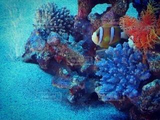 自然,動物,魚,水族館,水面,水中,ダイビング,珊瑚礁,カラー,海底,海洋生物学,サンゴ礁の魚,生命体