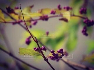 花,枝,草木