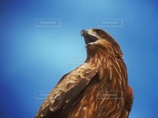 空,動物,鳥,野生動物,屋外