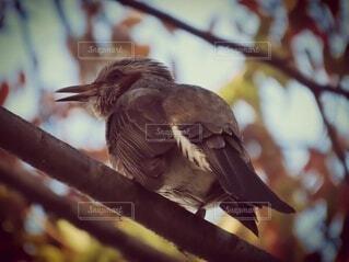 動物,鳥,屋外