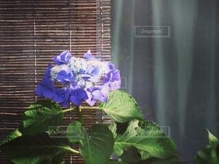 花,屋内,花束,窓,草木,フローラ