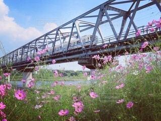 空,建物,花,橋,屋外,カラー,草木