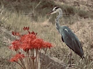 動物,鳥,屋外,草,立つ,水鳥