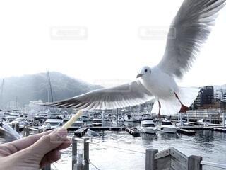 空,動物,鳥,屋外,水面,カモメ