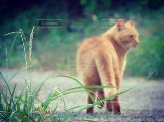 猫,動物,屋外,草