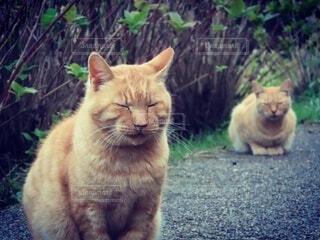 猫,動物,屋外,座る,地面,ネコ科