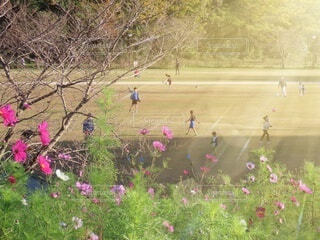 花,屋外,草,樹木,たくさん,草木