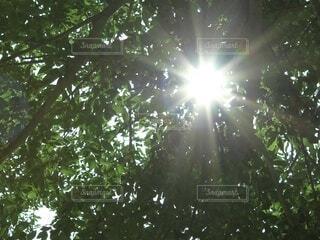 空,屋外,日光,樹木,明るい,草木
