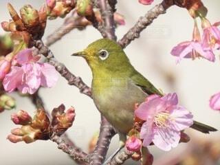 花,動物,鳥,ピンク