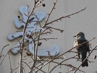 冬,動物,鳥,屋外,樹木,小枝