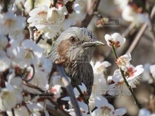 花,動物,鳥,屋外