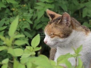 猫,動物,屋外,白,オレンジ,ネコ科