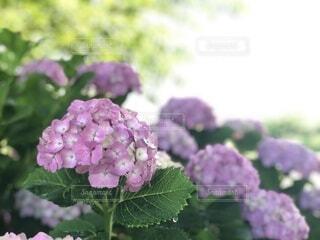 花,屋外,緑,景色,草木