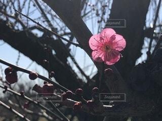 花,屋外,樹木,草木