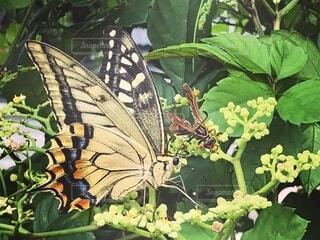 花,動物,蝶,草木,蛾や蝶