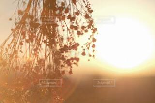 花,夕日,朝日,ドライフラワー,手芸,フィルムカメラ,飾り,アレンジ