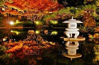 自然,秋,紅葉,枯れ葉,水面,落ち葉,ライトアップ,イチョウ,銀杏,日本庭園,和風,灯籠