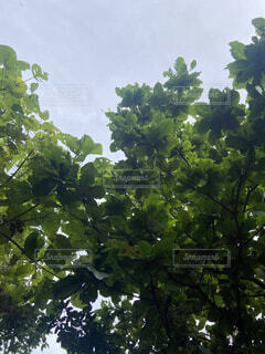 学生,自然,空,屋外,森,緑,植物,綺麗,葉っぱ,葉,水色,景色,反射,背景,樹木,iphone,大学生,原っぱ,壁紙,草木,黄緑