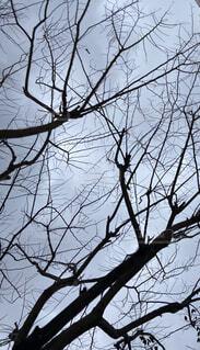学生,自然,空,冬,木,森,緑,植物,黒,枝,葉っぱ,背景,樹木,iphone,大学生,くもり,壁紙,クローズアップ,草木,小枝