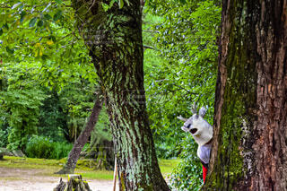 動物,森林,屋外,樹木,鹿