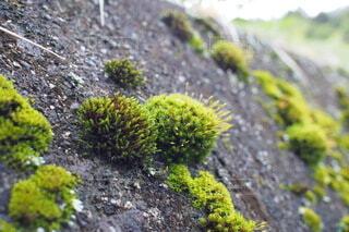 屋外,景色,苔,岩,地面,草木,菌,非血管陸上植物