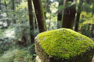 森林,木,屋外,樹木,苔,草木,非血管陸上植物