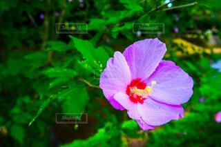 花,緑,花びら,樹木,カラー,草木,フローラ