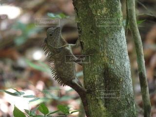 動物,野生動物,屋外,樹木,爬虫類,イグアナ,野生
