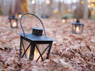 ランプと落ち葉の写真・画像素材[4031451]