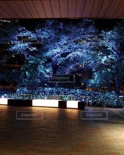 建物,屋外,樹木,明るい,クリスマス ツリー