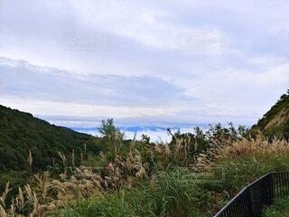 自然,空,屋外,雲,山,草,樹木,高原,草木