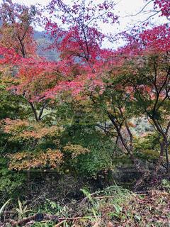 公園,花,秋,森林,屋外,葉,景色,草,樹木,新緑,草木,ガーデン,カエデ,ブロッサム