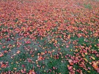 公園,秋,紅葉,屋外,カラフル,景色,草,草木,多彩