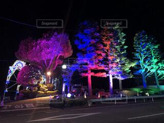 夜にライトアップされたクリスマスツリーの写真・画像素材[4065179]