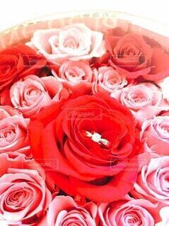 花,バラ,指輪,花嫁,結婚,ウエディング,婚約指輪,プレ花嫁