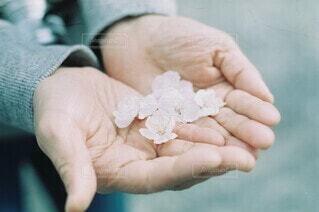 春,桜,屋外,手,人,温もり,母の手