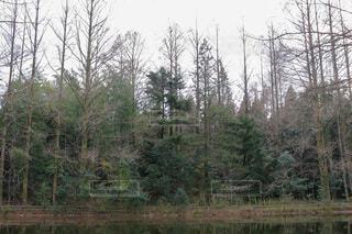自然,空,冬,森林,木,屋外,川,景色,樹木,草木,カラマツ