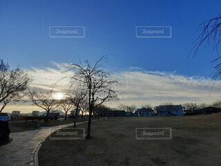 自然,空,屋外,樹木,2020年1月8日,8:00