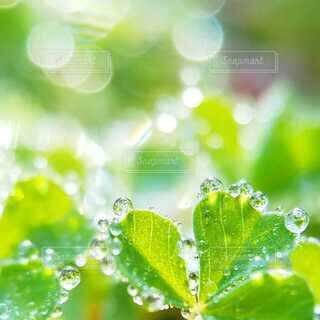 庭の草についた朝露の写真・画像素材[4046366]
