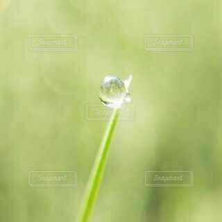 草についた朝露の写真・画像素材[4049442]