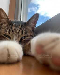 猫と空の写真・画像素材[4050566]