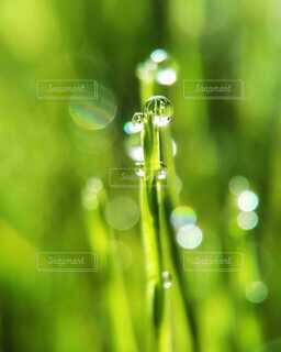 朝の光のなかでキラキラ輝く朝露の写真・画像素材[4050602]