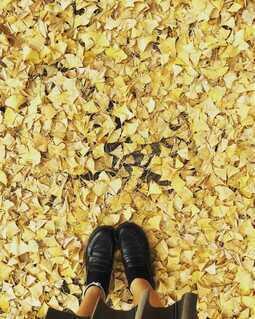 落ち葉と靴の写真・画像素材[4054911]