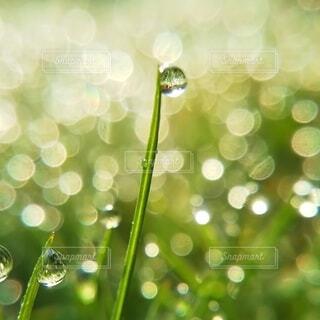 庭の草の朝露の写真・画像素材[4058375]