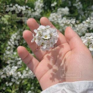花を持つ手の写真・画像素材[4062718]