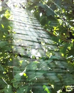 自然,風景,屋外,緑,葉,光,蜘蛛の巣,樹木,クモの巣,草木