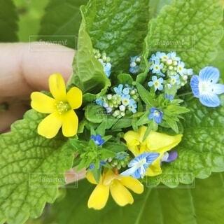 自然,花,春,緑,花束,かわいい,葉,景色,小さい,グリーン,草木,野の花,スプリング,ガーデン,フローラ