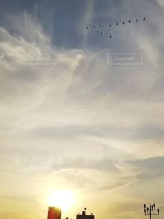自然,風景,空,公園,鳥,屋外,雲,夕暮れ