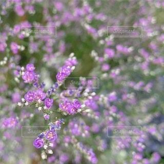 自然,花,屋外,かわいい,紫,小花,花屋,フローラ