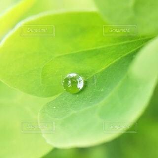 草と雫のクローズアップの写真・画像素材[4069418]